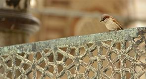 Suçlayan, Yargılayan, Kötüleyen Vaaz Dili ve Yozlaşan Müslümanlar