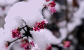 Mü'minin Baharı