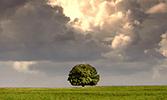 Ağaç Medeniyeti