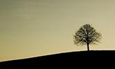 Ağaç Gölgesinde Bir Ömür