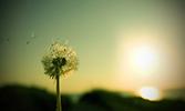 Rüzgâr ve Mümin