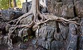 Ağaçların Sökülüp Geldiği Çetin Boykot Günleri (616-619)